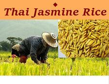 1000 Thai Jasmine Rice Heirloom Seeds,Unique flavor Organic from Thailand