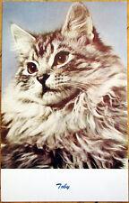 1950s Cat Breed Postcard: 'Toby' - Long-Hair w/Ad for Chimneys in Mt. Solon, VA