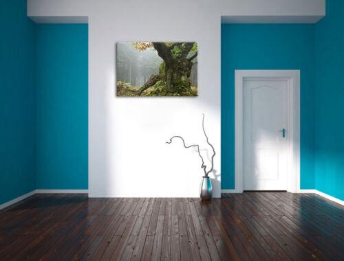 Dicker Baum im Wald im Moos  Leinwandbild Wanddeko Kunstdruck
