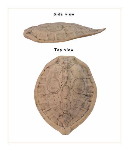 Géant tortues dos bouclier réplique vintage deco très vraiment