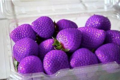 Purple Wonder Fruits Strawberry Strawberries Seeds 20 Seeds - Uk Stock -