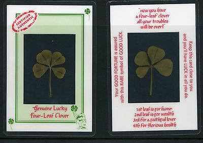 Serio Genuine Originale Fortunato 4 Leaf Clover Laminato Per La Protezione Nuovo Prezzo Di Vendita-mostra Il Titolo Originale