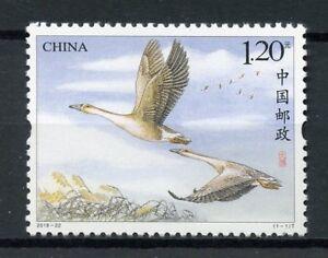 Cina-2018-Gomma-integra-non-linguellato-le-oche-oca-1v-Set-birds-stamps