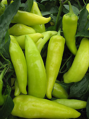 Hot Pepper - Hungarian Wax - 10 grams - appx 1,000 seeds - Vegetable