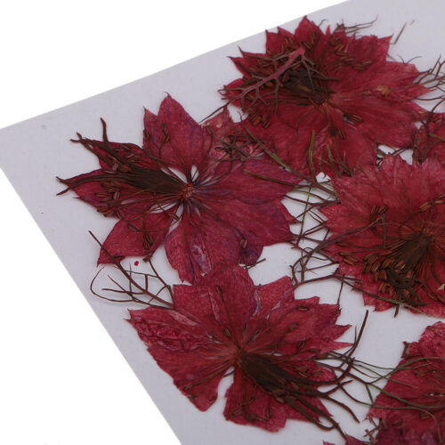 12pcs Pressed Natural Dried Flowers Red Love-in-a-mist DIY Resin Ornaments