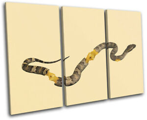 Apple-Core-Snake-Concept-Food-Kitchen-TREBLE-CANVAS-WALL-ART-Picture-Print