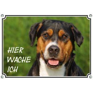 Enthousiaste Beau Chiens Bouclier-grand Suisses Sennenhund-dans Top Qualité-afficher Le Titre D'origine