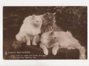 A-Family-Gathering-Cats-Schwerdtfeger-3682-4-1911-RP-Postcard-093b