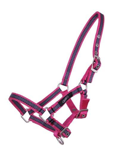 QHP Halfter fohlen collection Pink Leopard fur Shet und Pony