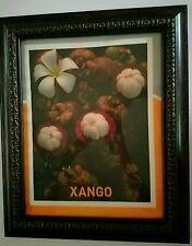 Xango Mangosteen Fruit Portrait In Beautiful Wooden Frame