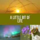 alittlebitoflife