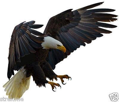 usa american bald eagle design 3 striking bird pose