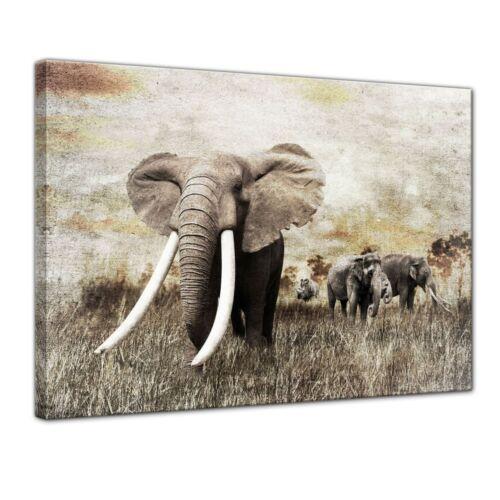 Elefanten Grunge Leinwandbild