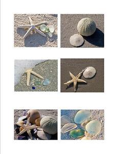 Greeting-Cards-Shells-amp-Sea-Glass-Fine-Art-Photography-6-Cards-Free-U-S-Ship