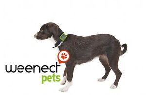 Weenect-Pets-Follow-your-pet-everywhere-with-this-GPS-device