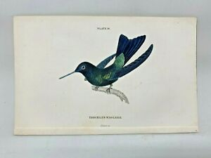 1st-Ed-Hand-colored-Jardine-039-s-Natural-History-1834-Mesoleucus-Hummingbird-17