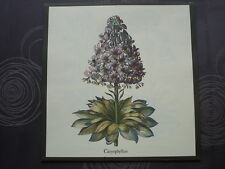 Prenten botanica, 10 mooi gekleurde prenten van tuinbloemen