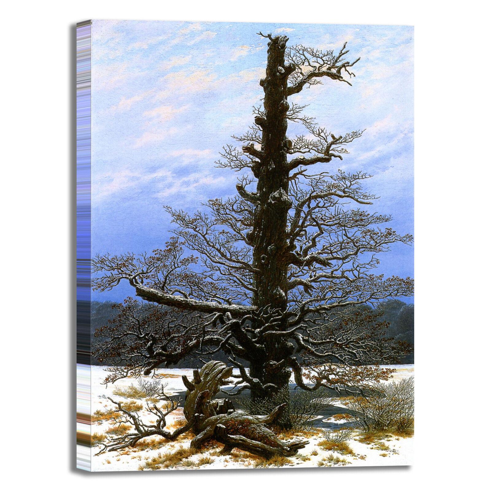 Caspar Caspar Caspar Oaktree con neve design quadro stampa tela dipinto telaio arroto casa 00ea5b
