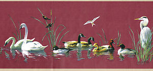 Beautiful Swans Wood Ducks Canada Geese Cattails