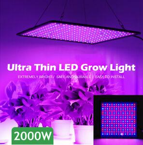 2000W LED Plant Grow Light Full Spectrum Plant UV Veg Lamp For Indoor Hydroponic