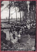 MONDINE 273 MONDARISO RISO RISAIA LAVORI AGRICOLI - FILM Cartolina REAL PHOTO