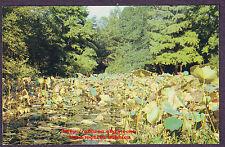 Postcard  SAM HOUSTON PARK  Water Lillies  LILY POND  Huntsville TX 1960's