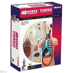 3D-Model-Body-Model-4D-Puzzle-Body-Torso-32pcs-Human-Anatomy-3D-Study-Bone-Model