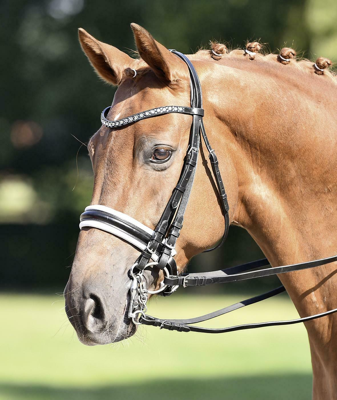 Double Bridle Comfort by BUSSE Solibel Various Variants