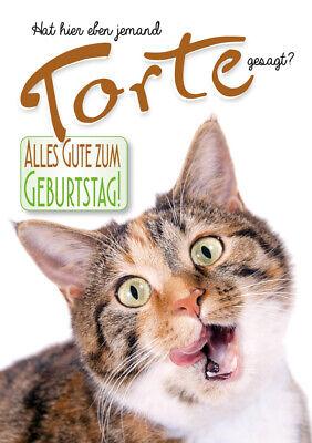 Geburtstag Katze Isoliert Auf Weiss Lizenzfreie Fotos Bilder Und