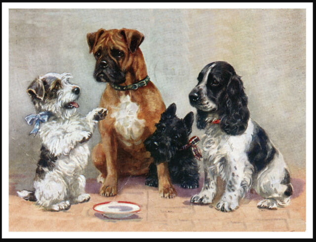 BOXER COCKER SPANIEL SEALYHAM AND SCOTTISH TERRIER LOVELY DOG PRINT POSTER