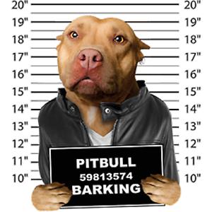 Pit Bull Mug Shot S//M-L//XL 2X//3XL Cover Up Nightshirt