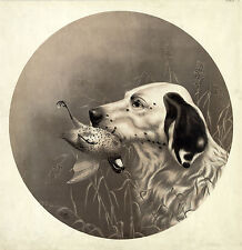 "1911 Drawing, BIRD DOG, Pointer, Hunting, 12""x12"" Print ART"