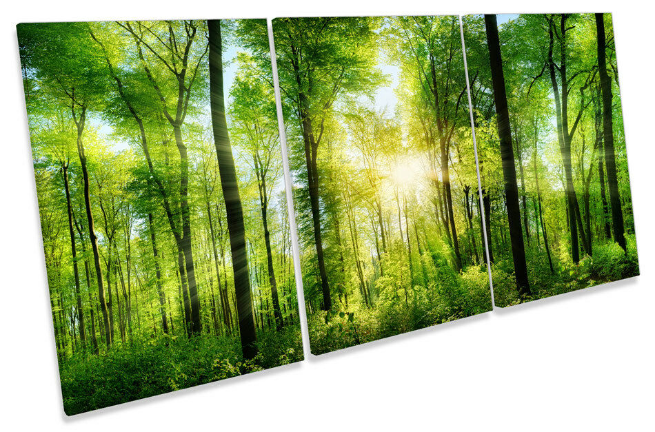 Grün Forest Trees Sunset  CANVAS WALL ART TREBLE Print Picture