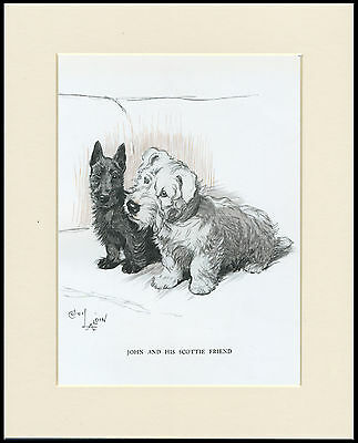 SEALYHAM TERRIER LOVELY IMAGE OLD 1930/'S CECIL ALDIN DOG ART PRINT READY MOUNTED
