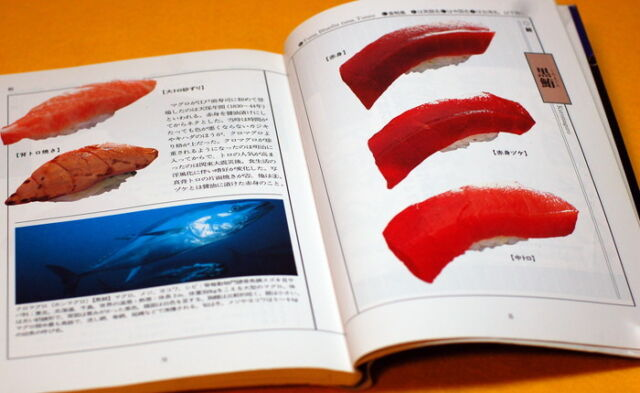 Japanese SUSHI Pictorial Book from Japan rare #0008