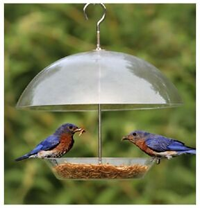 Clear Covered Dome Bird Seed Feeder For Small Birds
