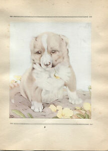 Edward Julius Detmold Vintage Print The Collie - The Book of Baby Dogs 1929