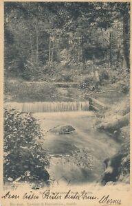 SEATTLE-WA-Ravenna-Park-Scene-1907