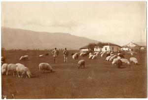Bulgarie-Bulgaria-Vitocha-Vitosha-massif-montagneux-elevage-de-moutons-Vin