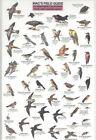Northern California Park Backyard Birds by Craig MacGowan 9780898863147 1991