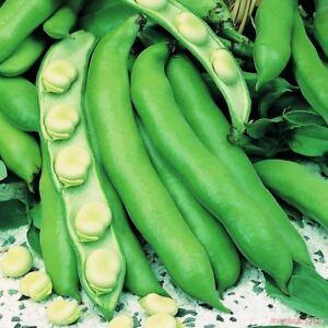 Seeds-20g-Beans-Yankel-White-Organic-Heirloom-Russian-Ukraine