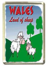 Welsh Dragon - Wales Land of Sheep Fridge Magnet - Wales/Cymru