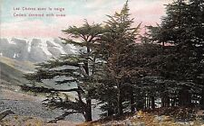 POSTCARD    ISRAEL   Cedars  covered with  snow