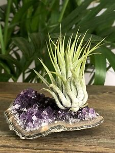 Amethyst-Air-Plant-Geode-Tillandsia-Crystal-Quartz-Cluster-Specimen-Table-Decor