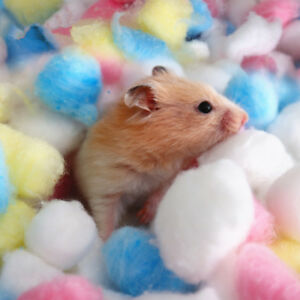 100Pcs-Bag-Colorful-Keep-Warm-Cotton-Ball-Cute-Cage-House-Filler-for-Hamster-Rat