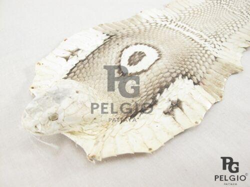 PELGIO Real Genuine Cobra Snake Skin with Head Leather Hide Pelt Natural