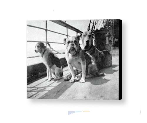 Jumbo Giclée 8.5X11 Print Rare Framed 1912 Titanic Dog Survivors Vintage Photo