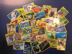 National-Geographic-Collectable-Animal-Cards