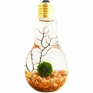 "Aquariums & Tanks Bliss Gardens 4"" Light Bulb Glass Water Terrarium With Marimo Moss Live Plants"