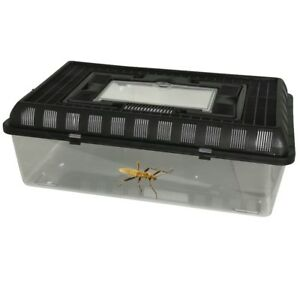 Details About Large Faunarium Spider Insect Reptile Tank Vivarium Cage Nursery Carry Transport